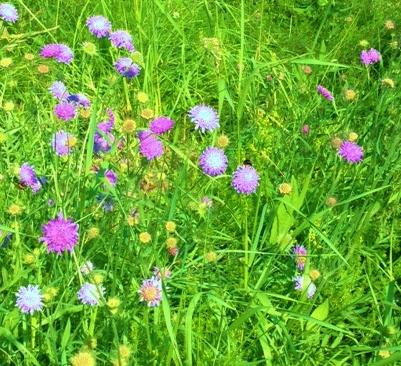 blomster og bie
